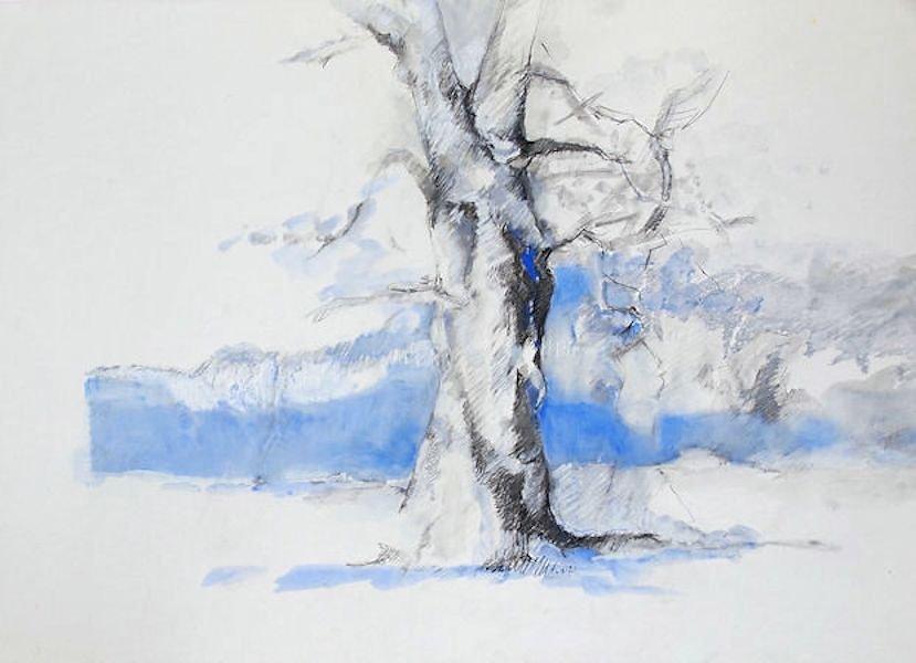 Eiche Urwald
